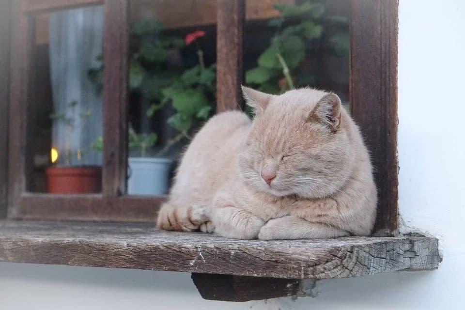 Senioren-Katze schläft auf Fensterbank