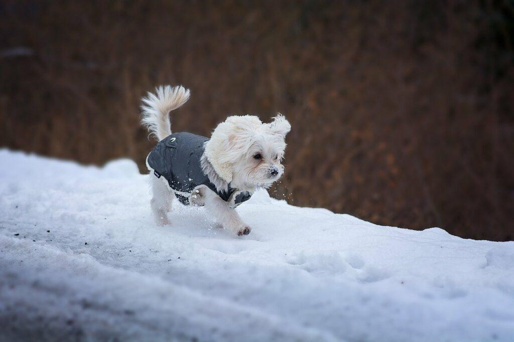 kleiner Hund im Schnee