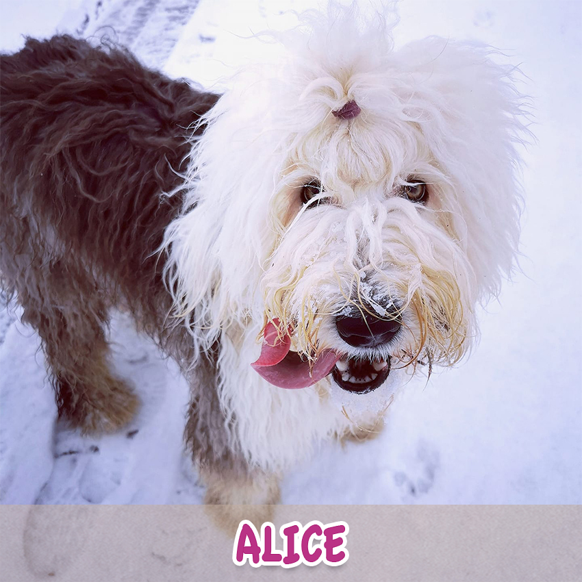 """Hündin """"Alice"""" (""""Lieblingstier-Foto""""-Aktion)"""