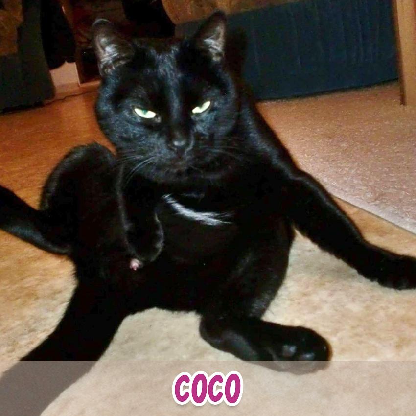 "Katze ""Coco"" (""Lieblingstier-Foto""-Aktion)"