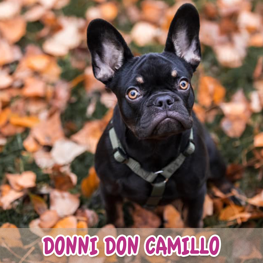 "Hund ""Don Camillo"" (""Lieblingstier-Foto""-Aktion)"