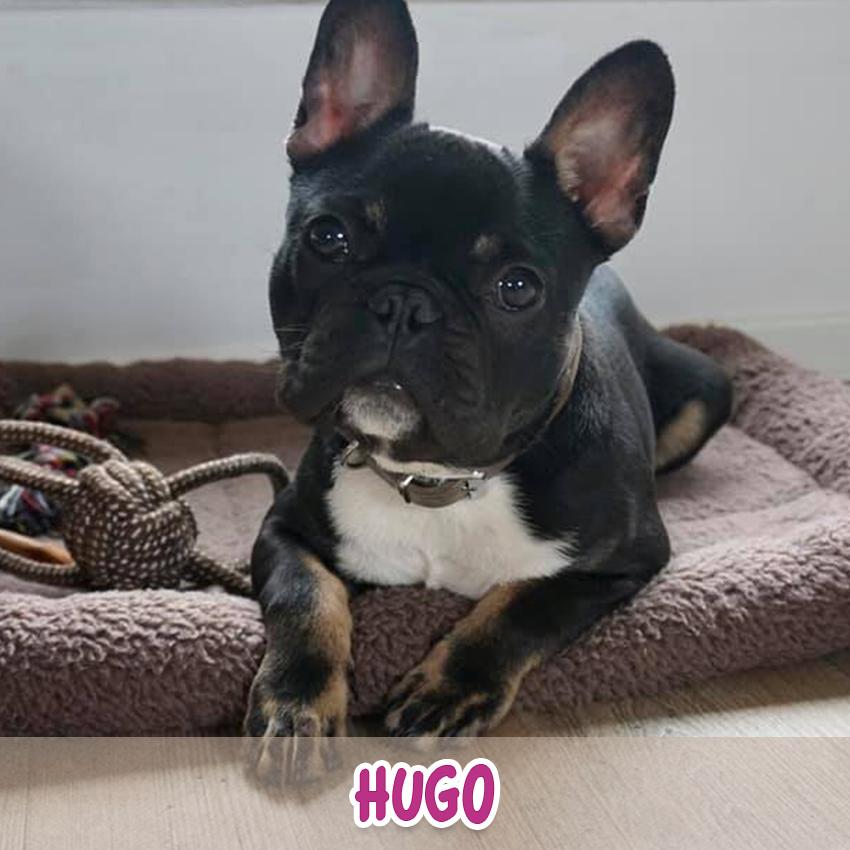 "Hund ""Hugo"" (""Lieblingstier-Foto""-Aktion)"