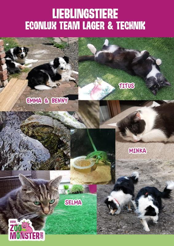 Fotos der Haustiere des Econlux-Lager- & Technik-Teams