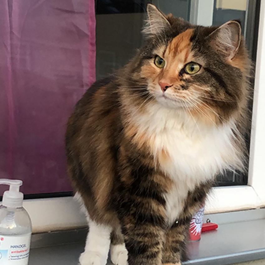 "Katze ohne Namen (""Lieblingstier-Foto""-Aktion)"
