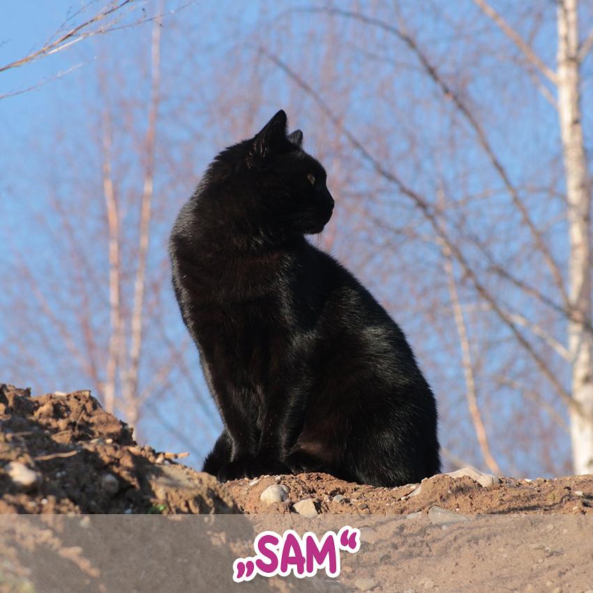 """Kater """"Sam"""" (""""Lieblingstier-Foto""""-Aktion)"""