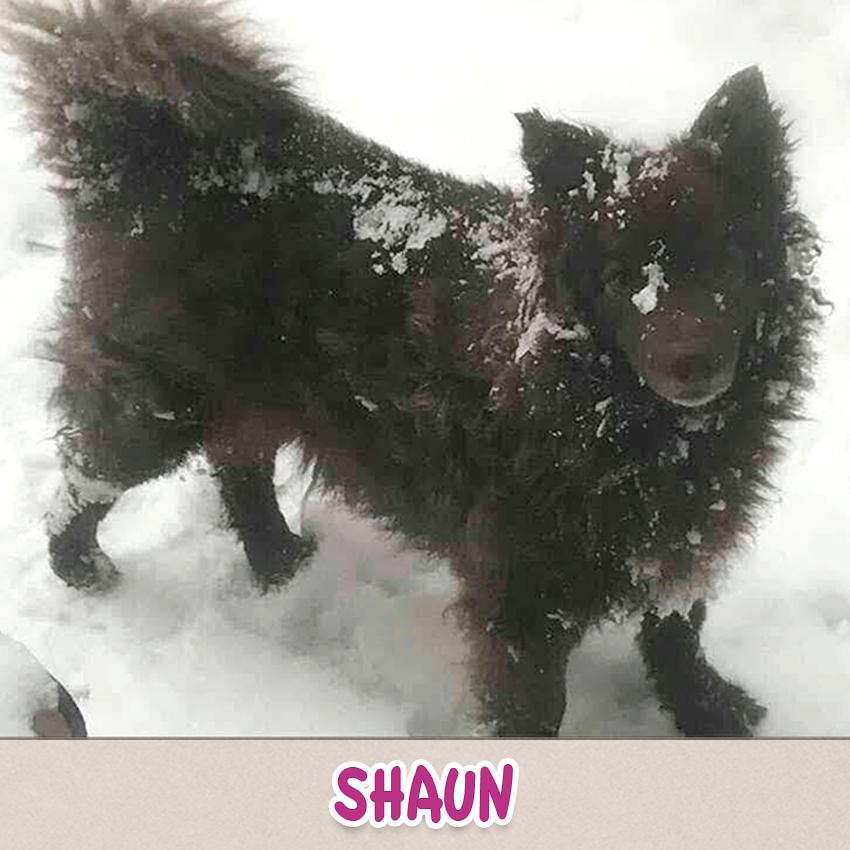 "Hund Shaun (""Lieblingstier-Foto""-Aktion)"