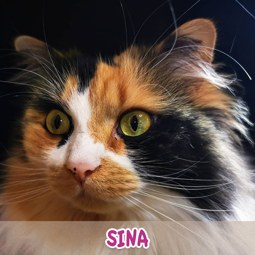 "Katze Sina (""Lieblingstier-Foto""-Aktion)"