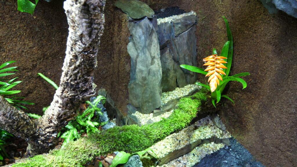 Impressionen aus dem Paludarium - Wasserfall