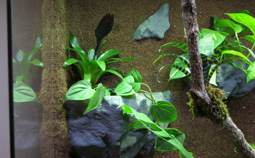 Impressionen des Paludarium-Dschungels
